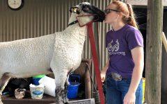 Montgomery County Fair closes due to coronavirus pandemic